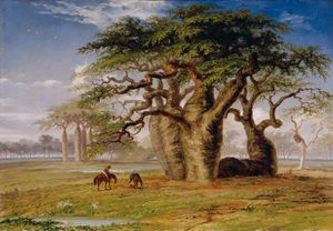 Thomas Baines - Group Of Gouty Stem Trees, Ada..