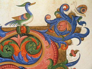 Matteo Di Filippo Torelli - Zoomorphic Foliage With Duck-like Bird And Butterfly, Detail Of Decoration Surround