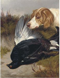 Colin Graeme Roe - A Gundog With A Black Game