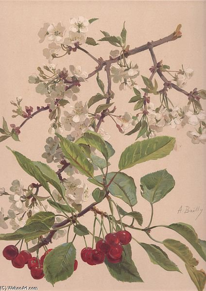 Watercolor Of A Cherry Branch by Alice Bailly (1872-1938, Switzerland) | Oil Painting | ArtsDot.com