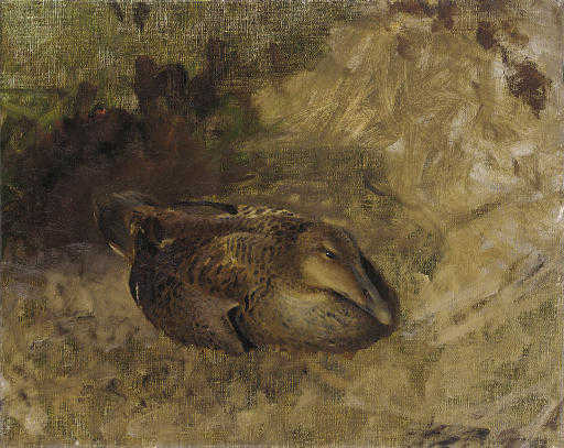 Study Of A Wild Duck by Bruno Andreas Liljefors (1860-1939, Sweden)