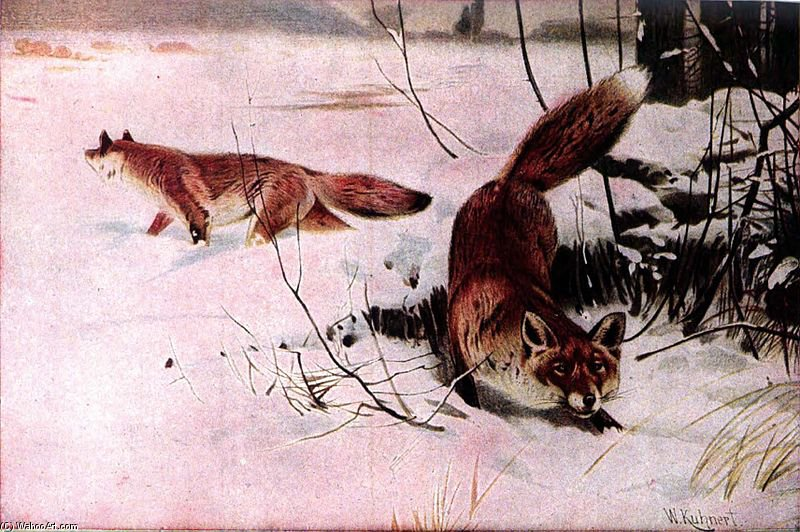 Drawing Of Two Red Foxes In A Snowy Field by Friedrich Wilhelm Kuhnert (1865-1926, Poland)