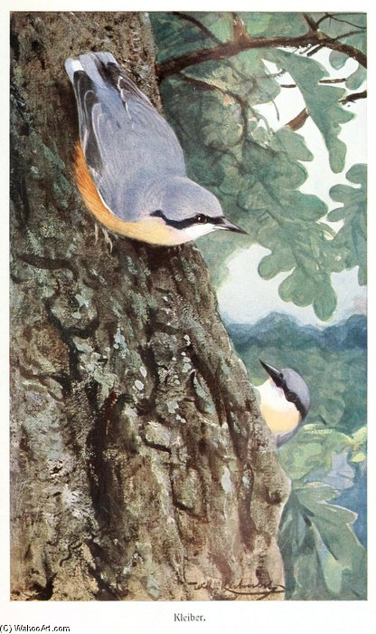 Nuthatch by Friedrich Wilhelm Kuhnert (1865-1926, Poland) | Museum Quality Reproductions | ArtsDot.com