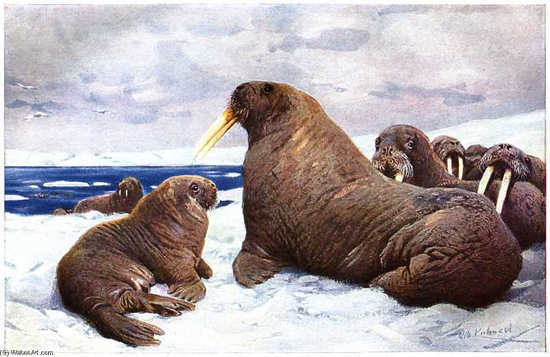 Walrus by Friedrich Wilhelm Kuhnert (1865-1926, Poland) | Museum Quality Reproductions | ArtsDot.com