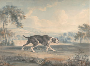 John Buckler - The Spanish Pointer