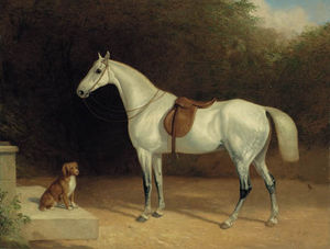Abraham Cooper - A Saddled Grey Hunter, With A Dog On A Stone Step, And A Robin