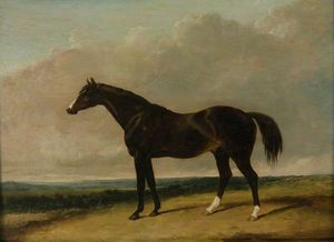 Abraham Cooper - The Racehorse, -camel-
