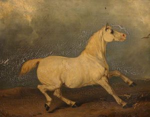 Charles Hancock - 'lily', A Grey Horse In A..