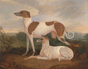 Charles Hancock - Two Greyhounds In A Lands..