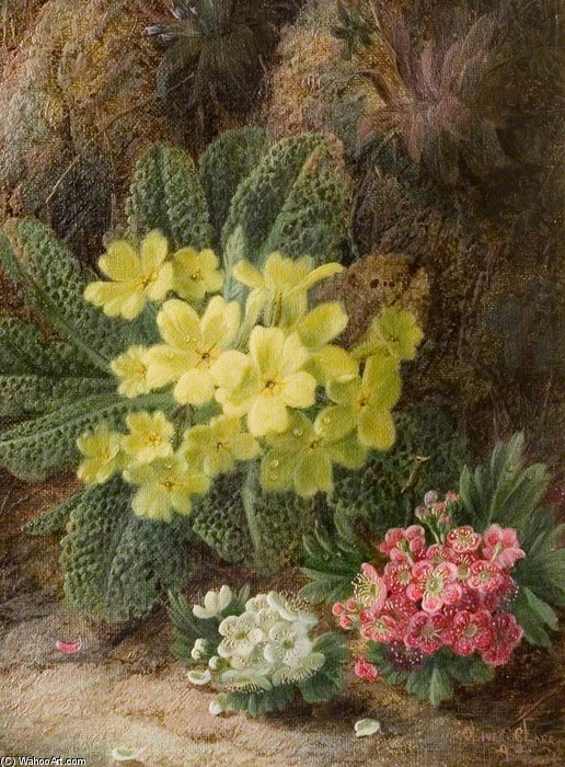 Primroses by Oliver Clare (1853-1927, United Kingdom)