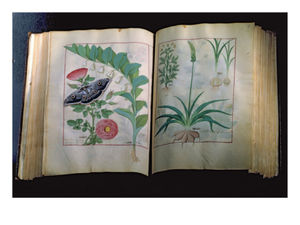 Robinet Testard - Two Pages Depicting Rose ..
