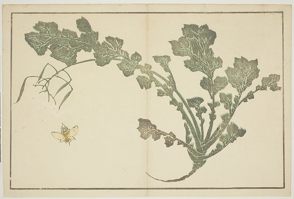 Fly And Herb by Katsushika Hokusai (1760-1849, Japan) | Art Reproduction | ArtsDot.com