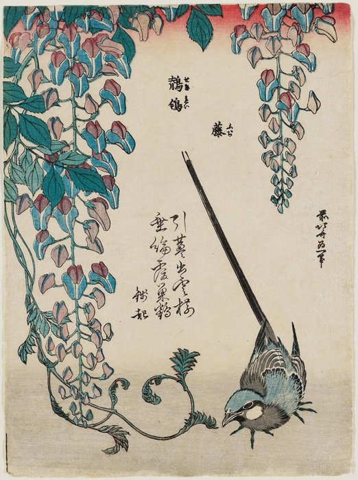 Wisteria And Wagtail by Katsushika Hokusai (1760-1849, Japan) | Museum Quality Reproductions | ArtsDot.com