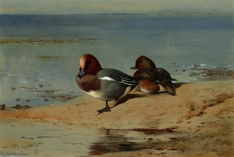 A pair of widgeon on the shore by Archibald Thorburn (1860-1935, United Kingdom)