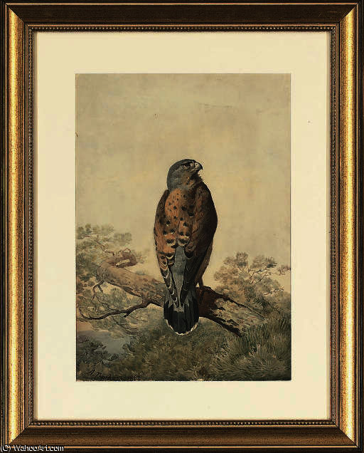 A perched kestrel by Archibald Thorburn (1860-1935, United Kingdom)