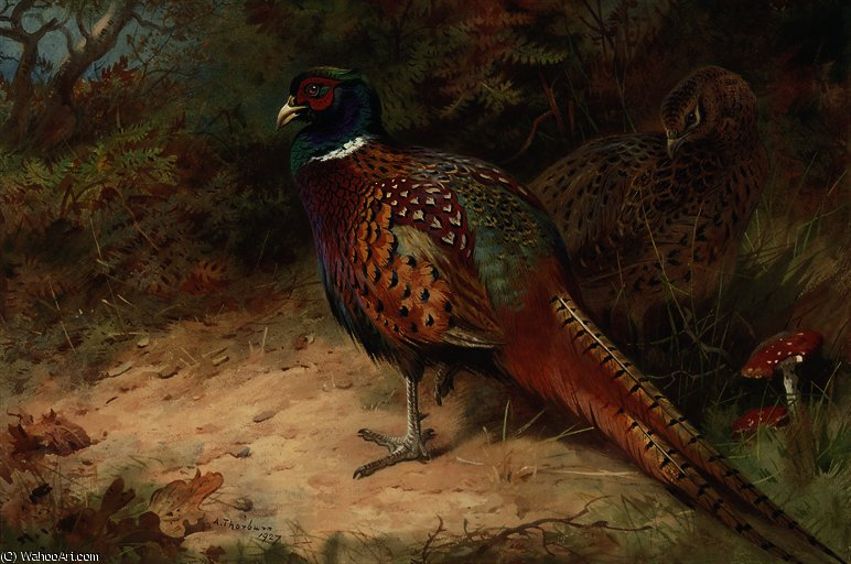 Cock and hen pheasant in the undergrowth by Archibald Thorburn (1860-1935, United Kingdom)