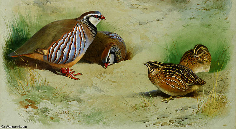 French partridge and chicks by Archibald Thorburn (1860-1935, United Kingdom)