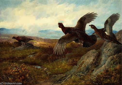 Grouse; blackcock; pheasant; and partridge by Archibald Thorburn (1860-1935, United Kingdom)