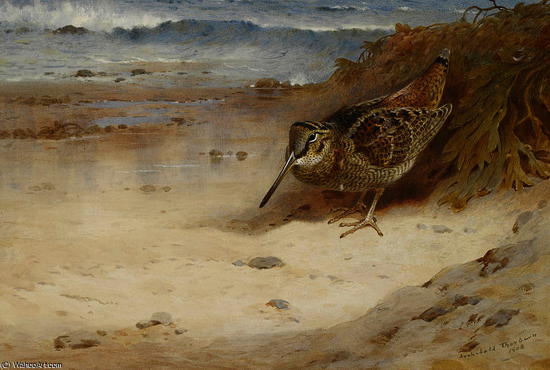 Hungry and homeless by Archibald Thorburn (1860-1935, United Kingdom)
