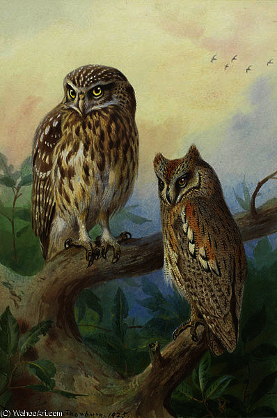 Little Owl and Scops Owl by Archibald Thorburn (1860-1935, United Kingdom)