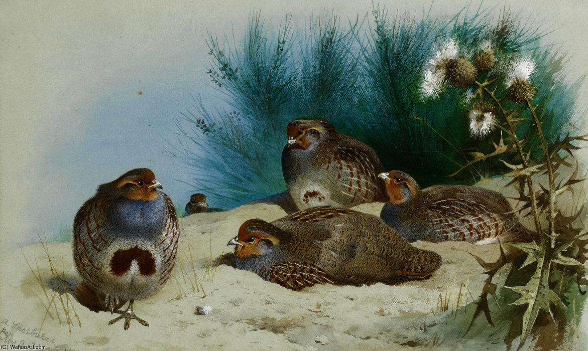 Nglish partridge with gorse and thistles by Archibald Thorburn (1860-1935, United Kingdom)