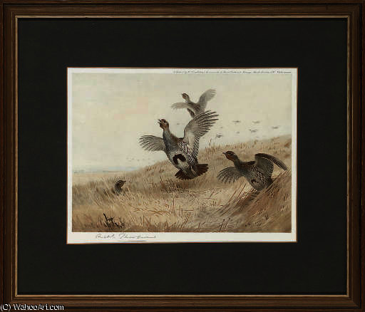 Partridge taking off; and foraging grouse by Archibald Thorburn (1860-1935, United Kingdom)