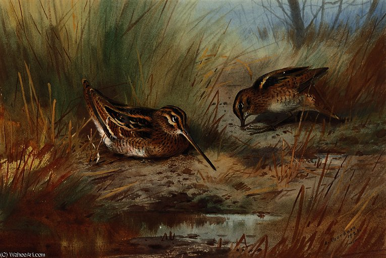 Snipe amid the reeds by Archibald Thorburn (1860-1935, United Kingdom)