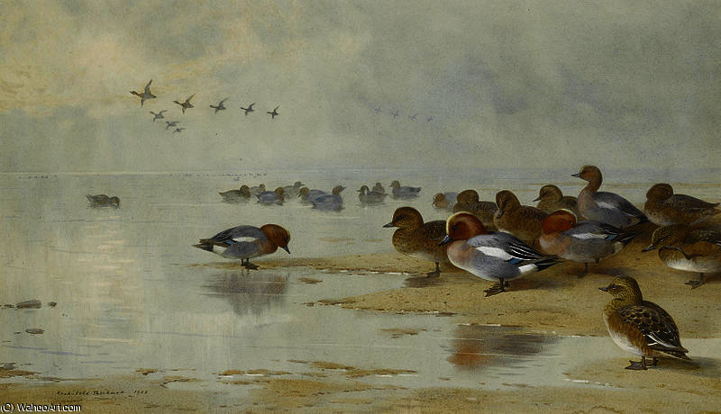 Wigeon and Teal by the water's edge by Archibald Thorburn (1860-1935, United Kingdom)