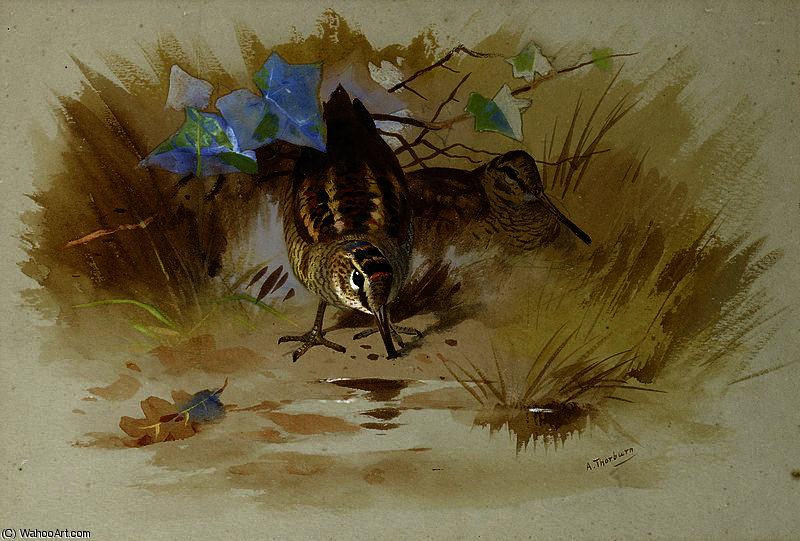 Woodcock in a sandy hollow by Archibald Thorburn (1860-1935, United Kingdom)