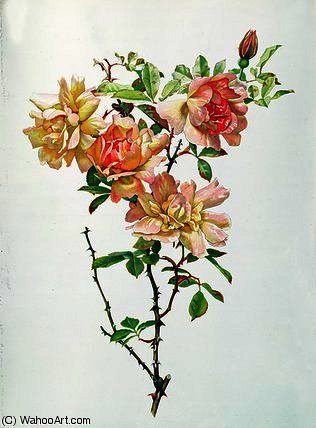 Rosa chinensis by Alfred Parsons (1847-1920, Australia) | Museum Art Reproductions | ArtsDot.com