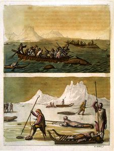 Gallo Gallina - Whale fishing and Seal hunting