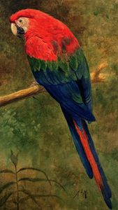 Henry Stacy Marks - Red and Blue Macaw