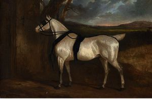 Charles Hancock - A grey carriage horse