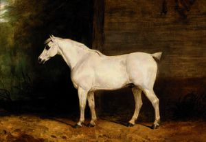 Charles Hancock - Punch, a grey horse by th..