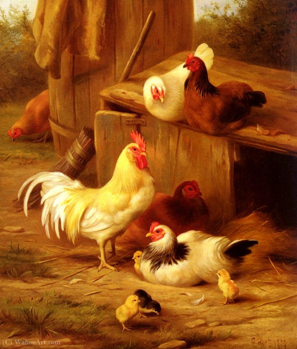 Chickens and chicks by Edgar Hunt