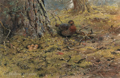 A hen capercailie with her nest by George Edward Lodge (1860-1954, United Kingdom)
