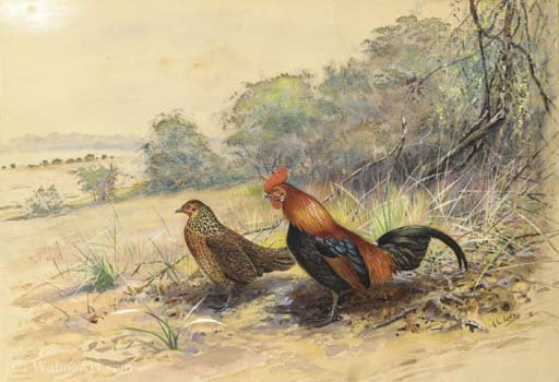 Cock and hen in a landscape by George Edward Lodge (1860-1954, United Kingdom)