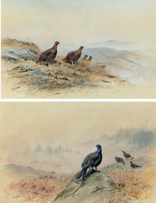 Red grouse on a rocky hillside; and blackcock on a rocky outcrop by George Edward Lodge (1860-1954, United Kingdom) | Painting Copy | ArtsDot.com