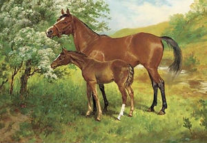 Wilson Hepple - A mare and foal in an orc..