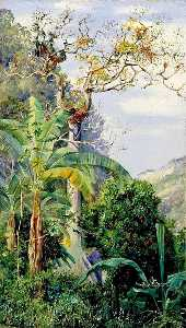 Marianne North - Great Cotton Tree, Jamaica