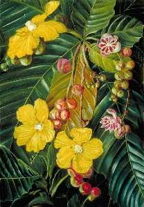 Marianne North - Foliage, Flowers and Frui..