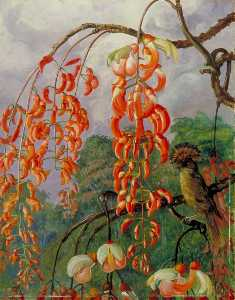 Marianne North - Flowers of a Coral Tree a..