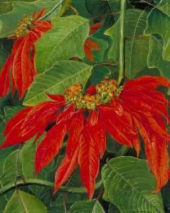 Marianne North - Flor de Pascua or Easter ..