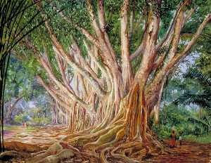 Marianne North - Avenue of Indian Rubber T..