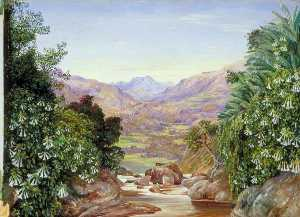 Marianne North - View from the Top of the Waterfall at Ramboddy, Ceylon