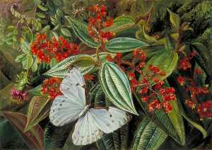 Marianne North - Trees Laden with Parasite..