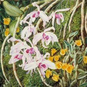 Marianne North - Orchids of Tropical Asia