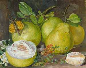 Marianne North - Flowers and Fruit of the ..
