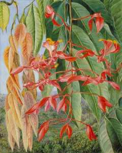 Marianne North - Foliage and Flowers of th..