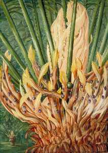 Marianne North - A Cycad in Fruit in Mr Hill-s Garden, Verulam, Natal